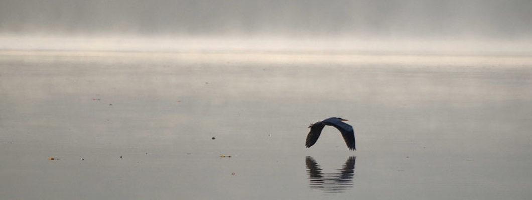 Vogel im Nebel
